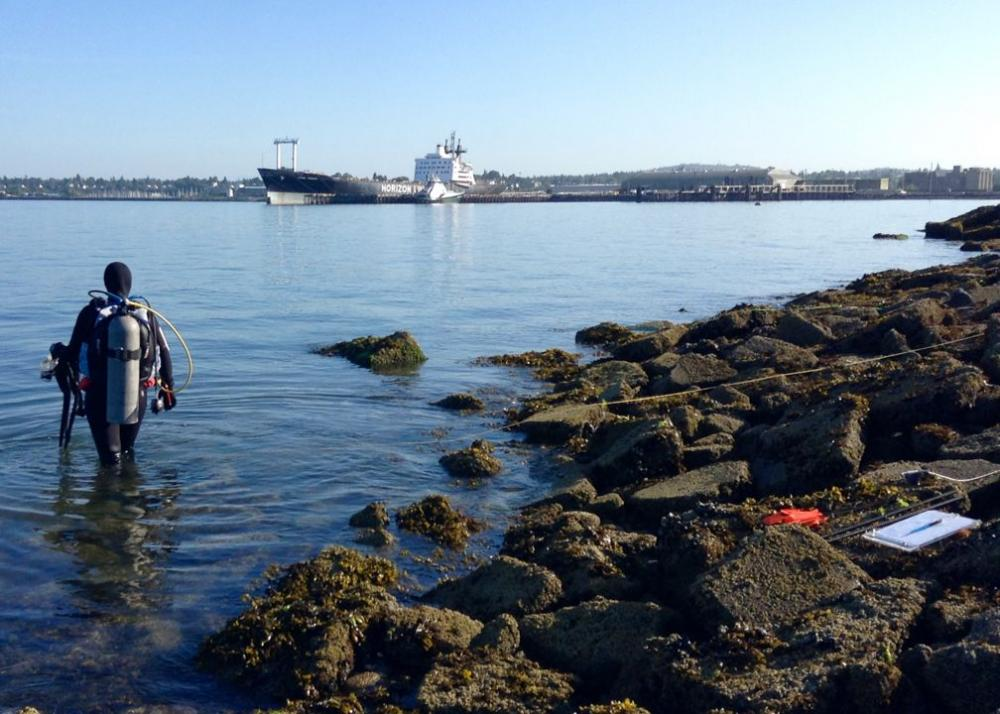 Eelgrass and macroalgae survey, Bellingham, Washington