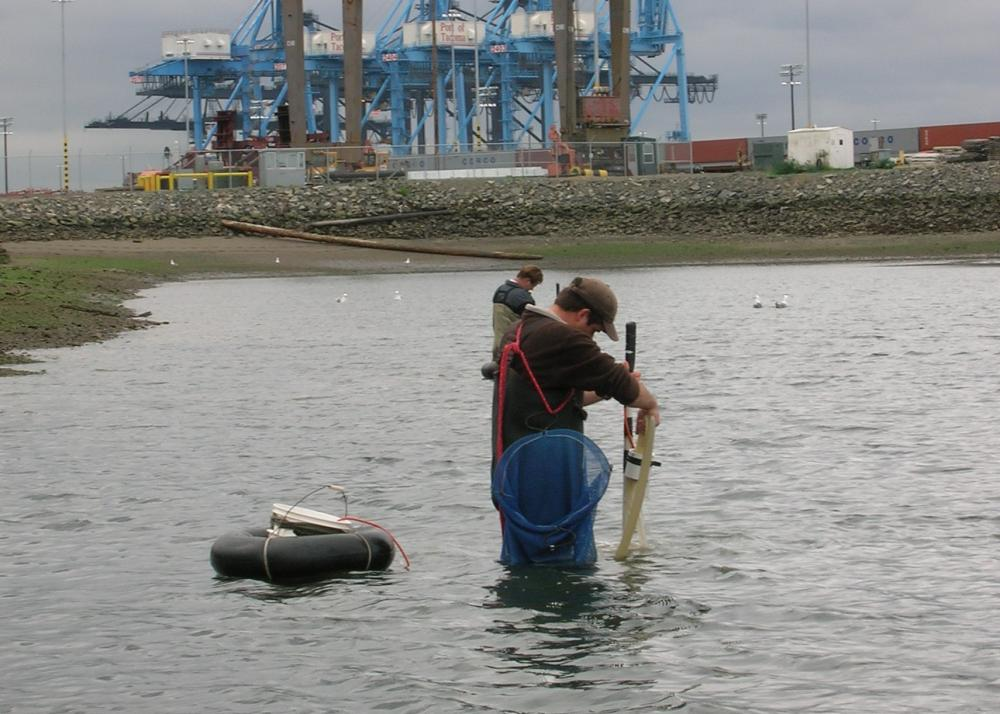 Benthic survey, Port of Tacoma, Pierce County, Washington